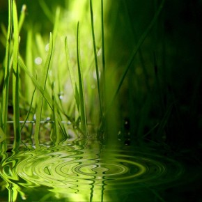 Green Grass Water Relax Wallpaper Download
