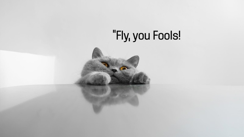 Quotes, Cat as Gandalf: Fly, you Fools!